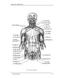 Giáo trình Vẽ Mỹ Thuật : VẼ BÚT SẮT part 4