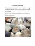 Cân bằng âm dương nhờ đá