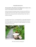 Bí quyết lựa chọn nhà vườn