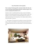 7 lưu ý khi sắp đặt cây xanh trong phòng
