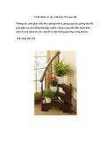 Cách chăm sóc cây cảnh bày trí trong nhà