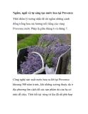 Ngắm, ngửi và tự sáng tạo nước hoa tại Provence