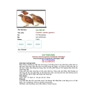 Các loài chim thuộc bộ gà part 1