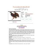 Các loài chim thuộc bộ gà part 5