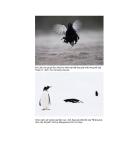 Các loài chim thuộc bộ gà part 7