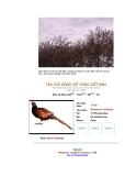 Các loài chim thuộc bộ gà part 8