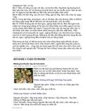 Kỳ hoa dị thảo part 9