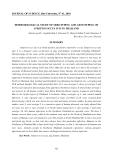 """Báo cáo nghiên cứu khoa học: """"nghiên cứu dịch tễ học của serotyping và kiểu gen của  vi khuẩn Streptococcus suis ở Thái Lan"""""""