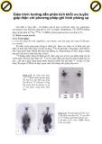 Giáo trình hướng dẫn phân tích khối ưu tuyến giáp thận với phương pháp ghi hình phóng xạ p1