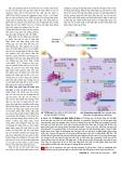 Công nghệ gene : Điều hòa biểu hiện gene part 3
