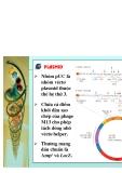 Công nghệ ADN tái tổ hợp part 4