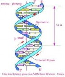 Thí nghiệm Sinh học phân tử - Lê Lý Thùy Trâm