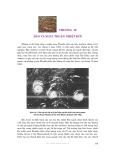 Thời tiết và khí hậu - Phần 4 Các nhiễu động - Chương 12