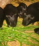 Bài giảng Thức ăn chăn nuôi - chương 5