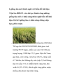 8 giống lúa mới thích nghi với biến đổi khí hậu