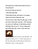 Bọ hung hại mía (Allissonotum Inpressicola) và cách phòng trừ