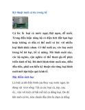 Kinh nghiệm nuôi cá lóc trong bể