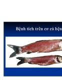 Bệnh học thủy sản : Bệnh do virus part 2