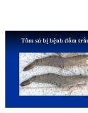 Bệnh học thủy sản : Chẩn đoán bệnh part 3