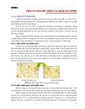 Thi công mặt đường ô tô - Chương 2