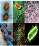 Bài giảng môn vi sinh thực phẩm - Chương 4