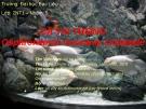 Kinh nghiệm nuôi Cá Tai tượng