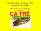 Chuyên đề: Kỹ thuật nuôi cá trê - ĐH Bạc Liêu