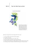 Adobe Illustrator CS2 - Bài 11