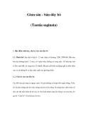 Giun sán - Sán dây bò (Taenia saginata)