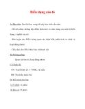 Giáo án Sinh học lớp 6 : Tên bài dạy : Biến dạng của lá