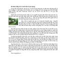 Mô hình trồng cỏ VA 06 ở tỉnh Tuyên Quang