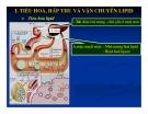 Bài giảng chuyển hóa các chất - Chuyển Hóa Lipid part 2
