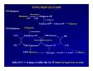 Bài giảng chuyển hóa các chất - Chuyển hóa Glucid part 5