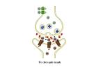 Bài giảng sinh hóa - Hóa sinh tổ chức thần kinh part 9