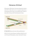 Polymerase, PCR là gì?