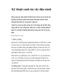 Kỹ thuật canh tác cây đậu nành dành cho nhà nông
