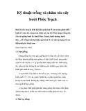 Kinh nghiệm trồng và chăm sóc cây bưởi Phúc Trạch