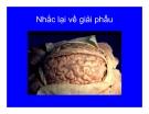 Bài giảng chẩn đoán và điều trị Viêm màng não part 2