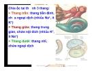 Bài giảng thần kinh thính giác part 2