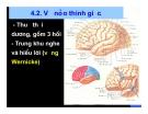 Bài giảng thần kinh thính giác part 3