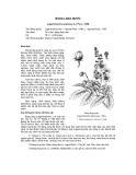Tài liệu về kỹ thuật trồng, đặc điểm sinh lý và phân bố của cây Bằng Lăng Nước