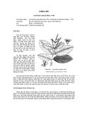 Tài liệu về kỹ thuật trồng, đặc điểm sinh lý và phân bố của cây Chiêu Liêu