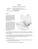 Tài liệu về kỹ thuật trồng, đặc điểm sinh lý và phân bố của cây Dầu rài