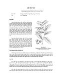 Tài liệu về kỹ thuật trồng, đặc điểm sinh lý và phân bố của cây Dẻ Yên Thế
