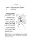 Tài liệu về kỹ thuật trồng, đặc điểm sinh lý và phân bố của cây Đước Nhọn