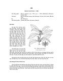Tài liệu về kỹ thuật trồng, đặc điểm sinh lý và phân bố của cây Hồi