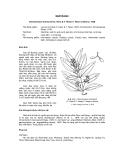 Tài liệu về kỹ thuật trồng, đặc điểm sinh lý và phân bố của cây Quế Rành