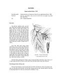 Tài liệu về kỹ thuật trồng, đặc điểm sinh lý và phân bố của cây Sao Đen