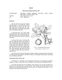 Tài liệu về kỹ thuật trồng, đặc điểm sinh lý và phân bố của cây Su Ổi