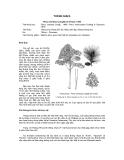 Tài liệu về kỹ thuật trồng, đặc điểm sinh lý và phân bố của cây Thông Nhựa